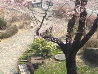 春の体験会