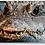 Thumbnail: West African Crocodile Keychain