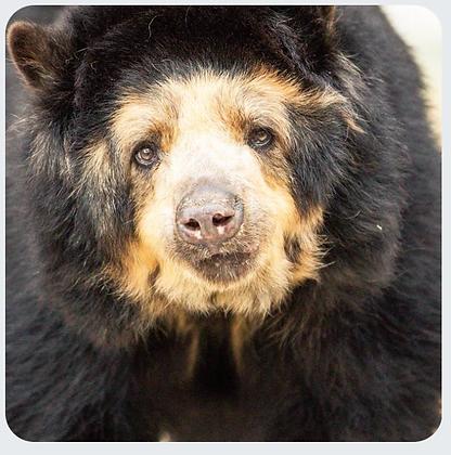 Bear Coasters