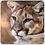 Thumbnail: Wild Cat Coasters