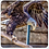 Thumbnail: Assorted Birds Coasters