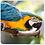 Thumbnail: Assorted Birds set 2 Coasters