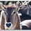 Thumbnail: Waterbuck Keychain