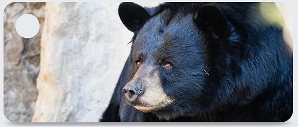 American Black bear Keychain