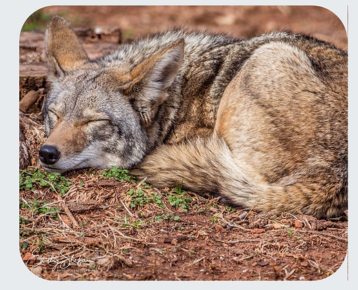 Coyote Mouse Pad