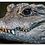 Thumbnail: West African Crocodile 2 Keychain