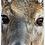 Thumbnail: Whitetail Deer Keychain