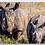 Thumbnail: Rhino Family Keychain