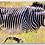 Thumbnail: Zebra Keychain
