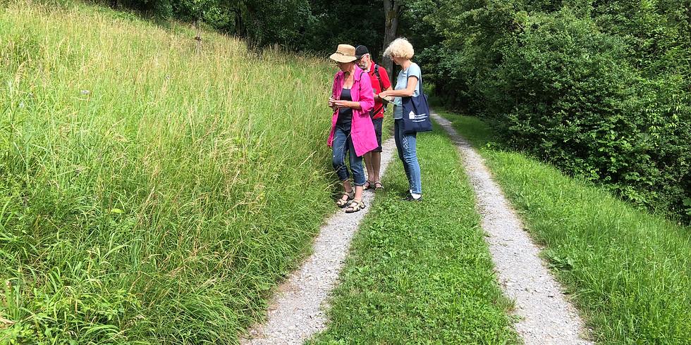 Botanische Radtour durch das Zipfelbachtal