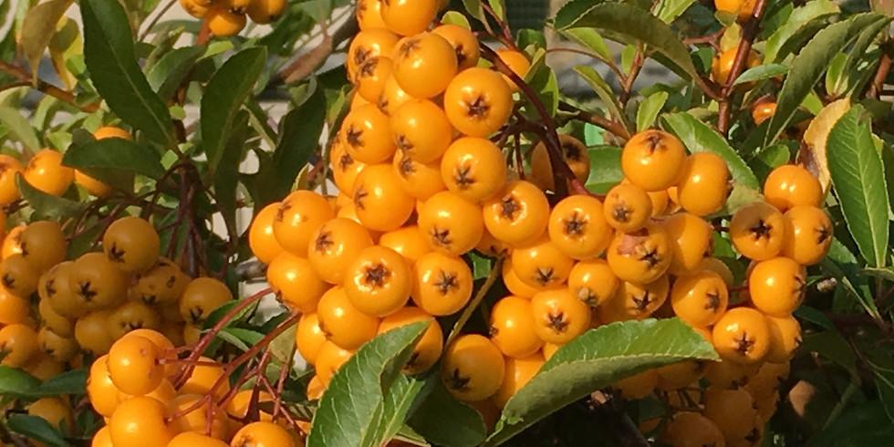 Bunte Beerenvielfalt im Herbst