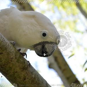 albator_leparcdesperroquets_26260bren.jp