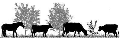 Animal silhouette.JPG