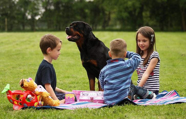 Family Protection Dog