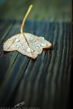 October Rain
