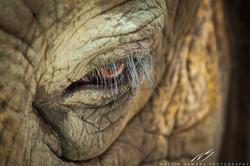 Tears of the Captive