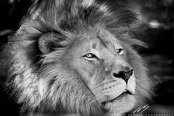 The King Unwinding