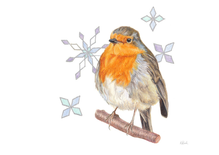 Yuletide Robin