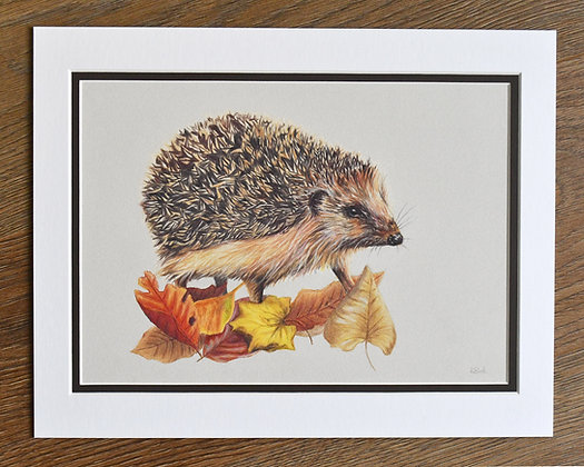 Harry Limited Edition Print