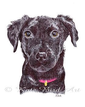 Pet Portrait Drawing, Labrador Puppy