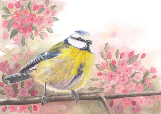 Blossom Bluetit