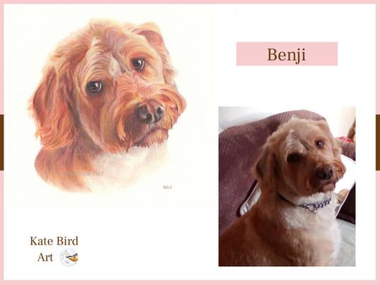 Benji Comparison