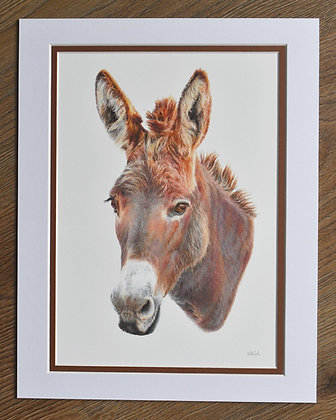 Darcy Limited Edition Print