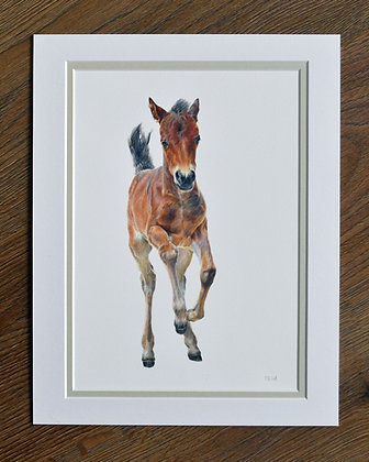 New Forest Foal Limited Edition Print