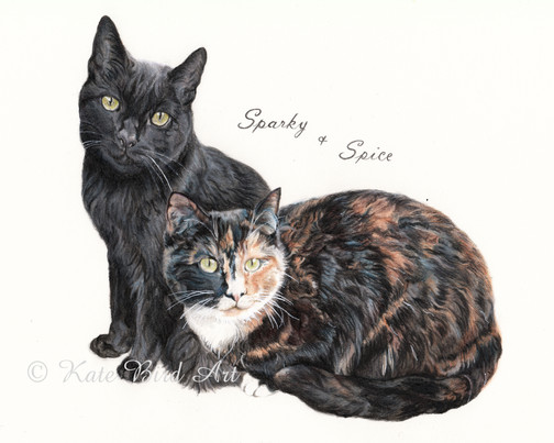 Sparky and spice
