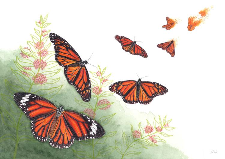 Flutter-Bye Monarch