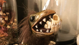 critter1.jpg