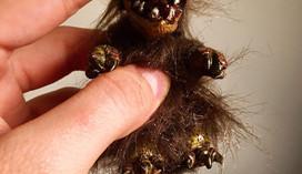 critter3.jpg
