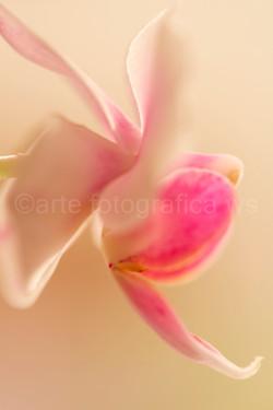 Blüten-Propeller