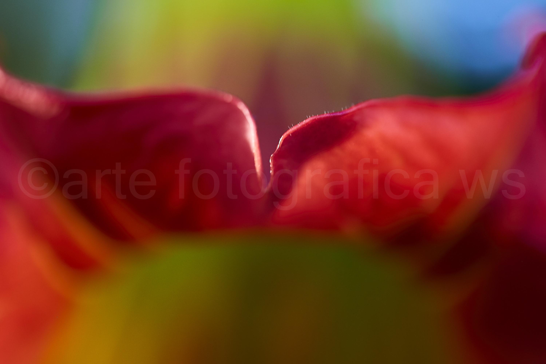 Blüten-Kuss