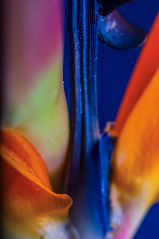 nature-art-06