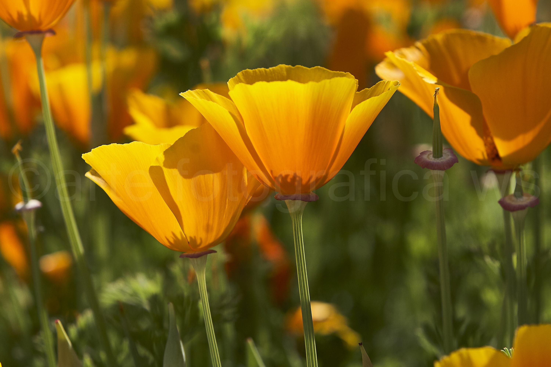 Blumen-Leuchten