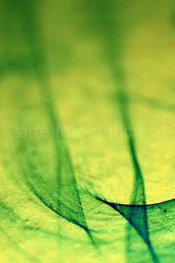 Grün-parallel