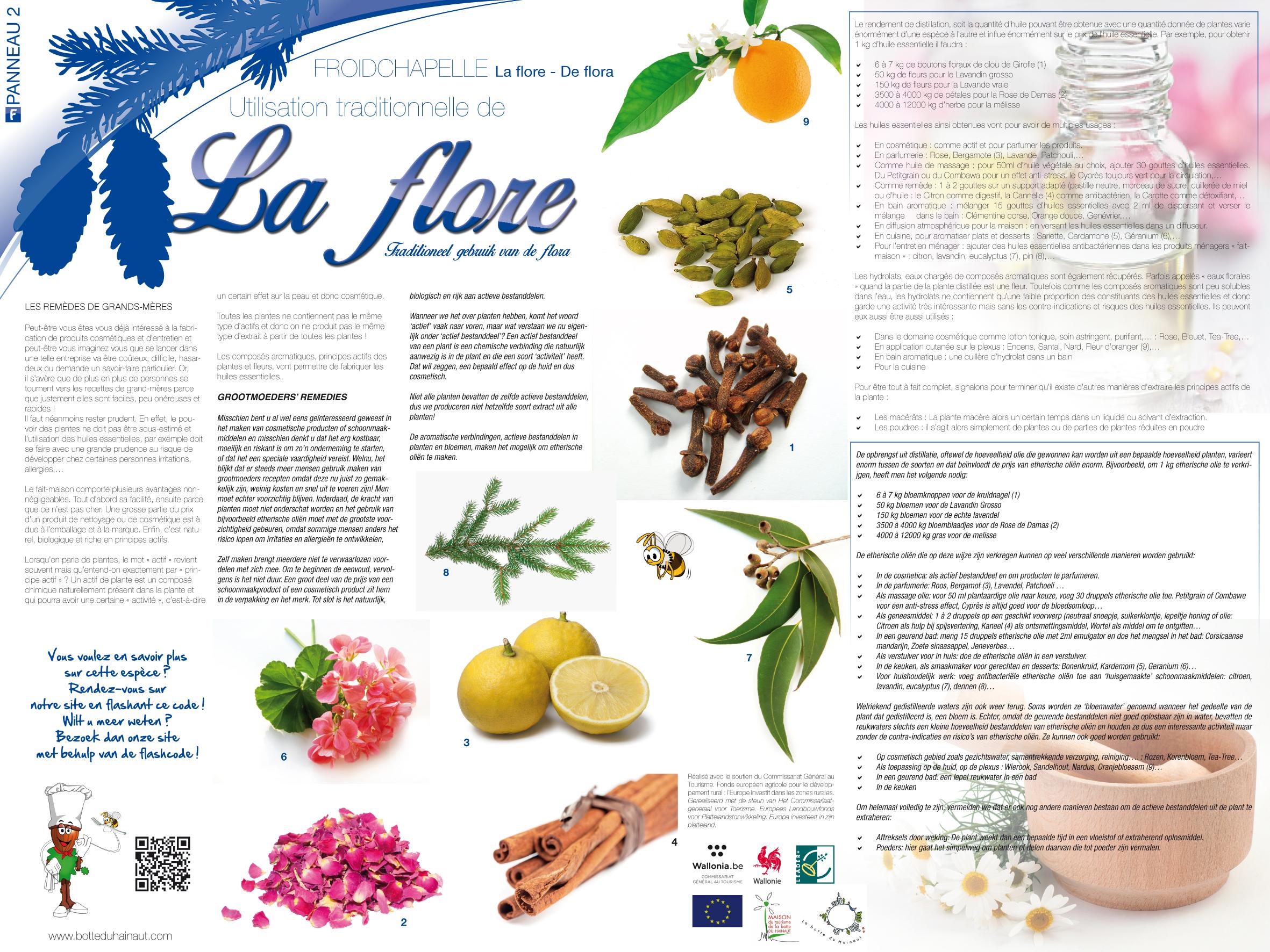 Froidchapelle_La flore_Utilisations traditionnelles