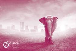 elephant monochrome