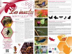 Chimay_La faune_Les insectes