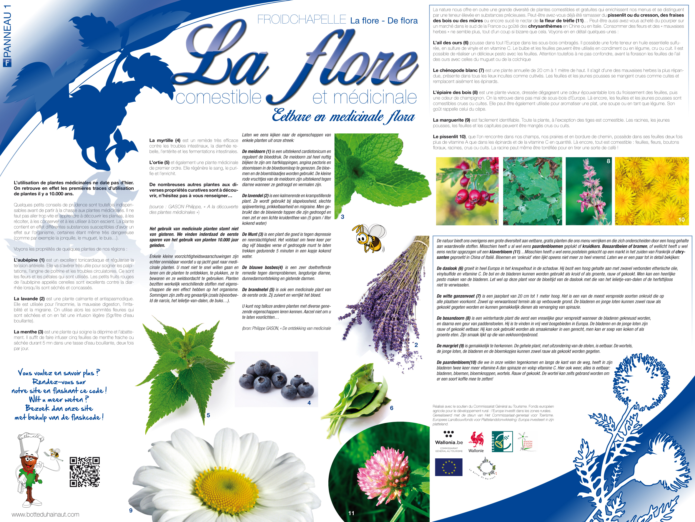 Froidchapelle_La_flore_Commestible_et_médicinale