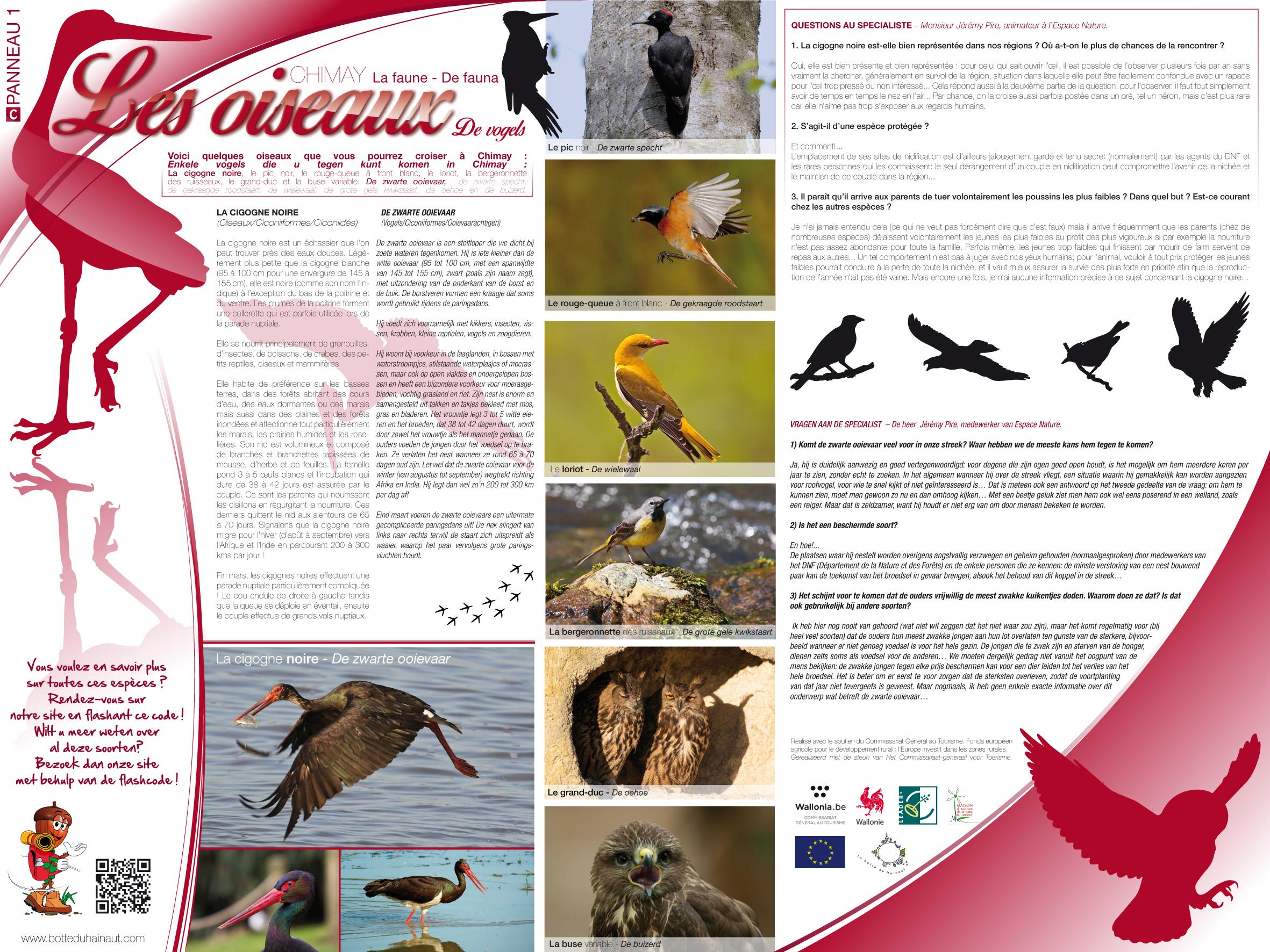Chimay_La faune_Les oiseaux