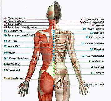 La signification des maladies dans le corps