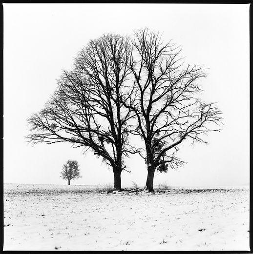 5. 2Arbres hiver copie.jpg