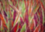 MariaDumlao-print_edited.jpg