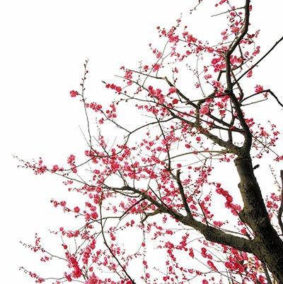 Spring-Cherry-Blossom-1_edited.jpg