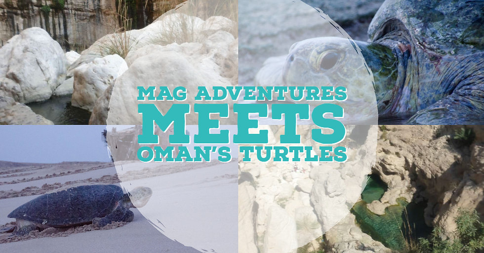 MAG turtles v.2.jpg