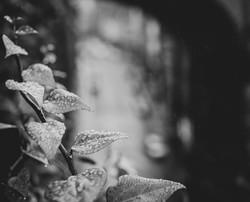 Graham Hunt photography-4