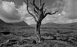 1 Glen coe tree scotland.jpg