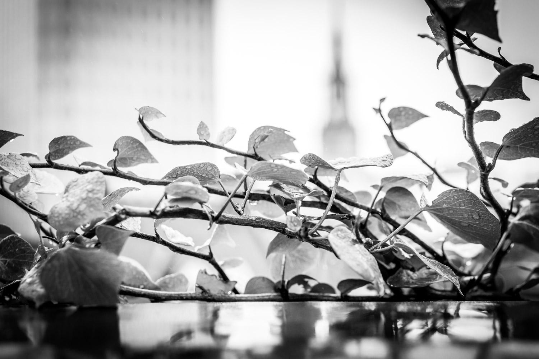 Graham Hunt photography-5